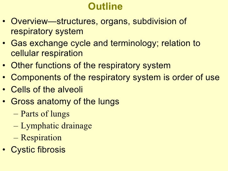 outline of respiratory system