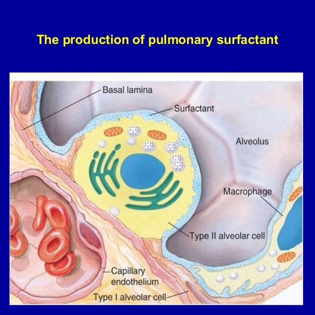 respiratory problems The respiratory system is a combination of organs and tissues associated with breathing respiratory diseases afflict every human at some time or the other in their life.