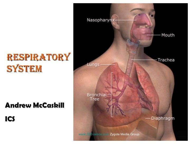 www.3DScience.com  Zygote Media Group.  Respiratory System Andrew McCaskill ICS