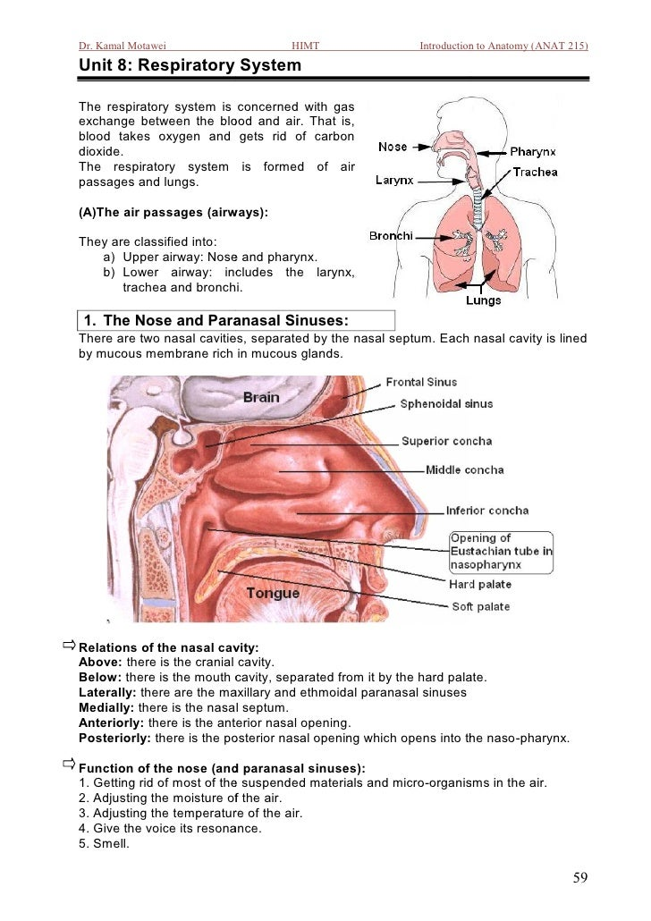 Dr. Kamal Motawei                   HIMT                  Introduction to Anatomy (ANAT 215)Unit 8: Respiratory SystemThe ...