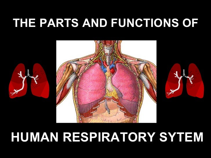 THE PARTS AND FUNCTIONS OF   HUMAN RESPIRATORY SYTEM