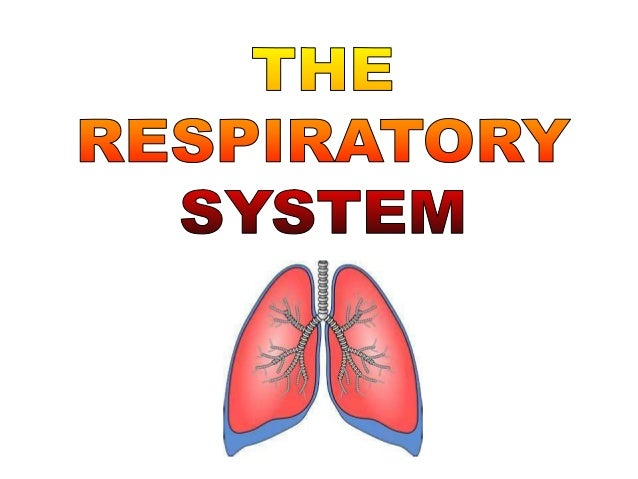 Which gas is:Taken up forrespiration?               Eliminated as                              a waste?