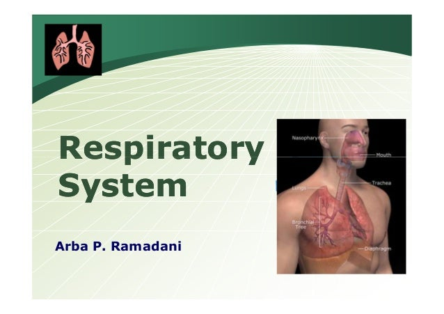 LOGO  Respiratory System Arba P. Ramadani