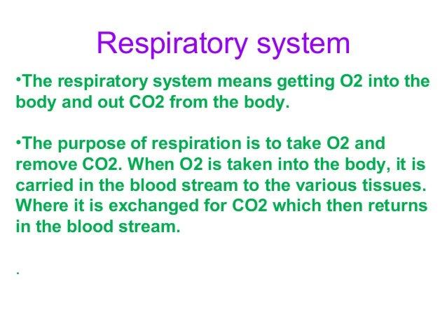 respiratory-system-2-638?cb=1385203183, Human Body