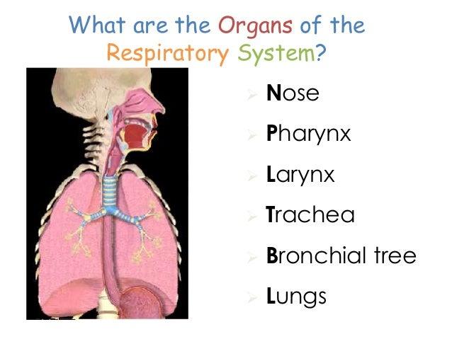 Grade 9 Respiratory system – The Human Respiratory System Worksheet