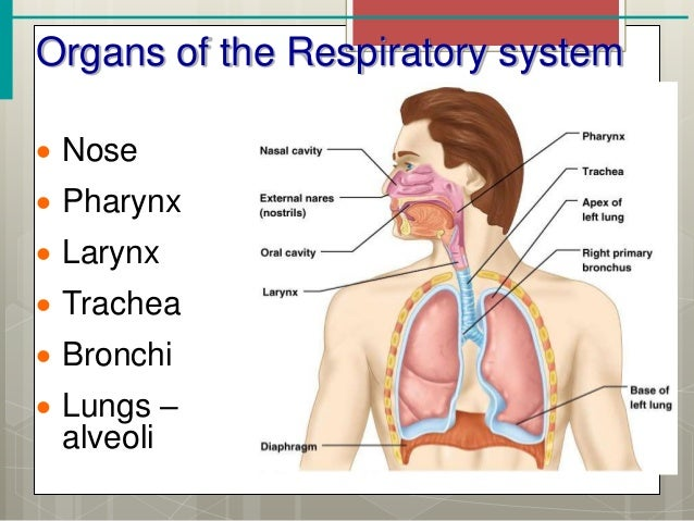Elementary 20science together with Concept Map Of Circulatory System also Frog Dissection Worksheet additionally Respiratory System further T2 E 2290 The Circulatory System Differentiated Reading  prehension Activity  WS8QASMoHA4. on human circulatory system worksheet answers
