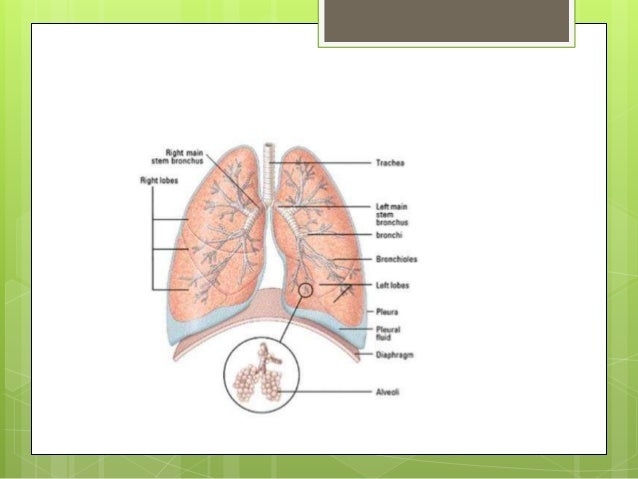 Physiological anatomical barriers of the respiratory system normal tracheal mucosa of dog 5 why respiratory system ccuart Choice Image