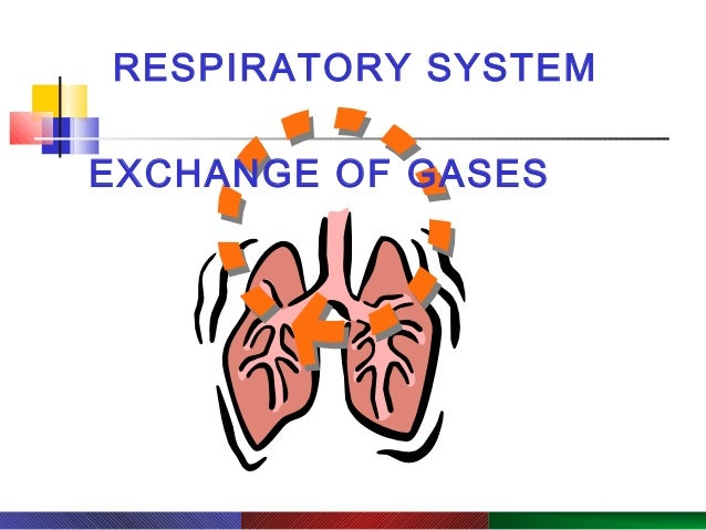 Copyright © 2003 Pearson Education, Inc. publishing as Benjamin Cummings. RESPIRATORY SYSTEM PowerPoint® Lecture Slide Pre...