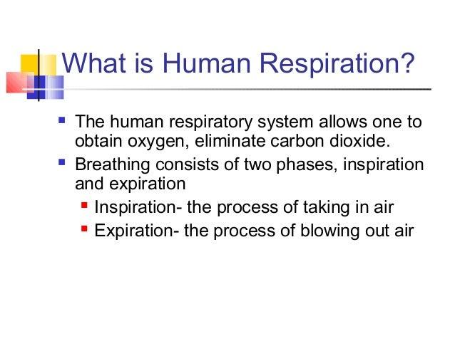Respiratory system Slide 2