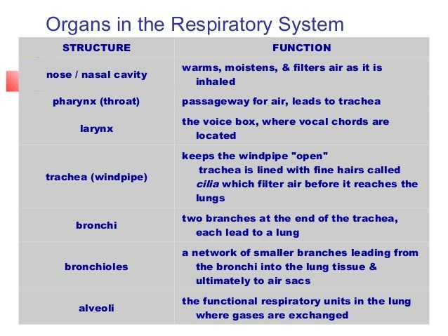5 Functions of Respiratory System |Respiratory System Organs And Functions