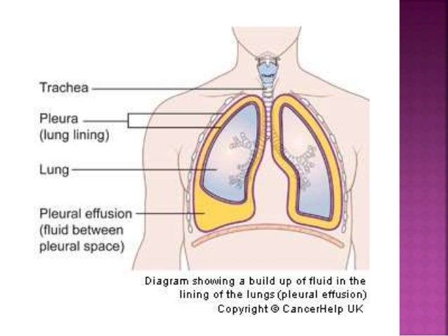 Respiratory system with objectives by saliha rais if i cant breathe under water how can a fish ccuart Images