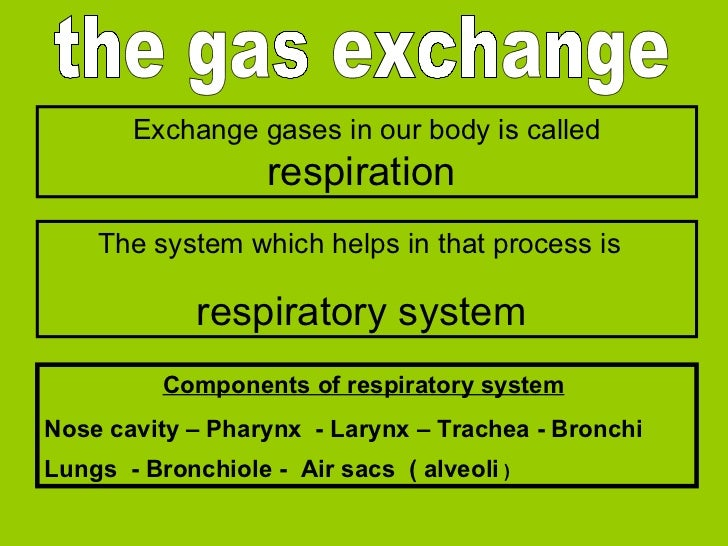 the gas exchange Exchange gases in our body is called   respiration  The system which helps in that process is   respirato...