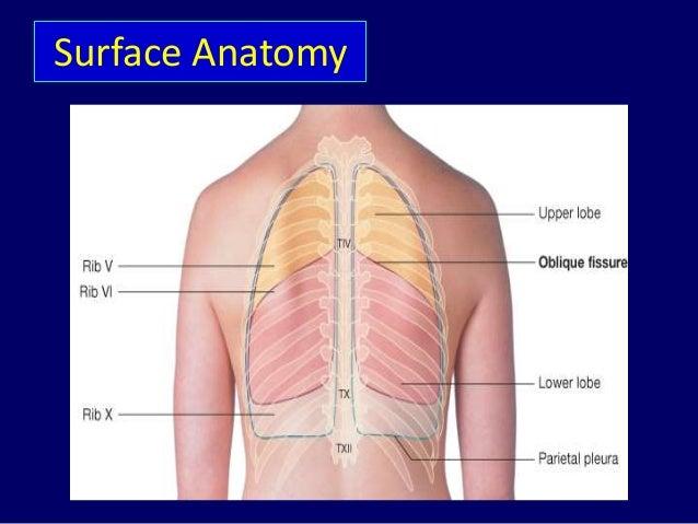 Respiratory system anatomy Dr.Tinku Joseph
