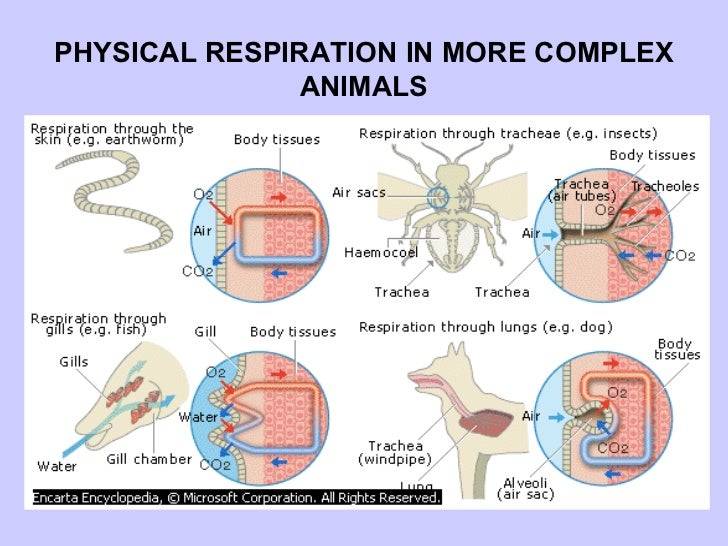 Easy weight loss tips that work mammals respiration respiration rates mammal vs reptile reptile vs mammal in ccuart Gallery