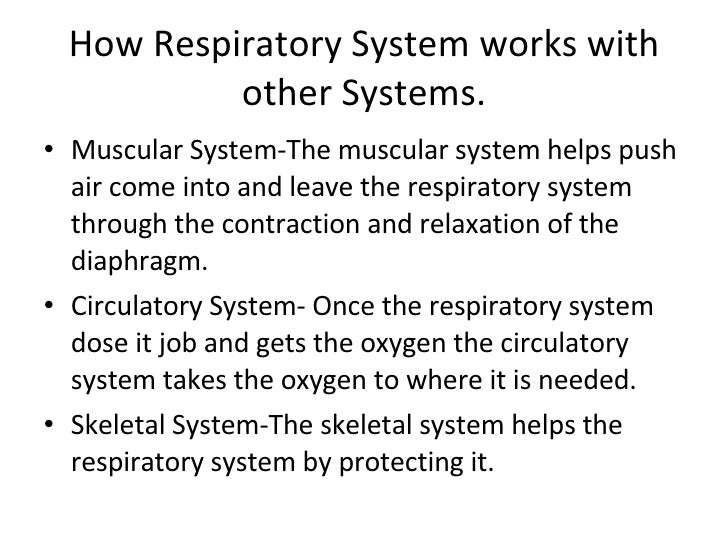 how lungs work Respiratory system and other systems, how they work together if you take a deep breath, put your hand on your chest and breathe out, you will feel that your lung fills with air when you breathe how does the respiratory system work with other systems.