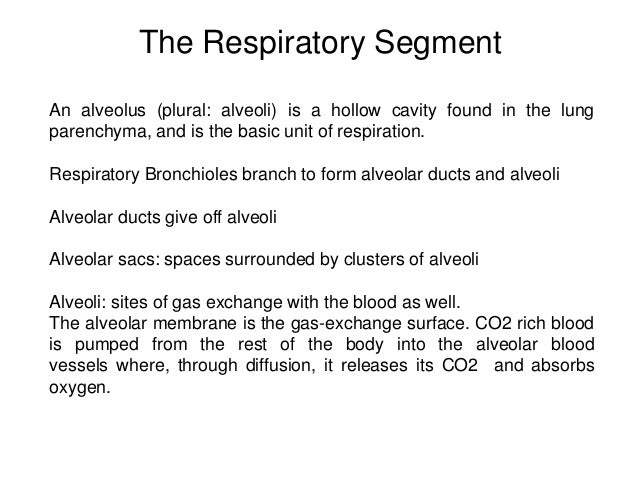 Respiratory system manash paul ppt