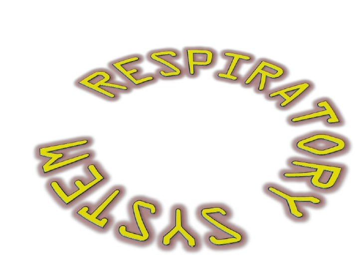 Respiratory System• Functions  – Large area for gas exchange  – Move air to & from lungs  – Protect respiratory surfaces  ...