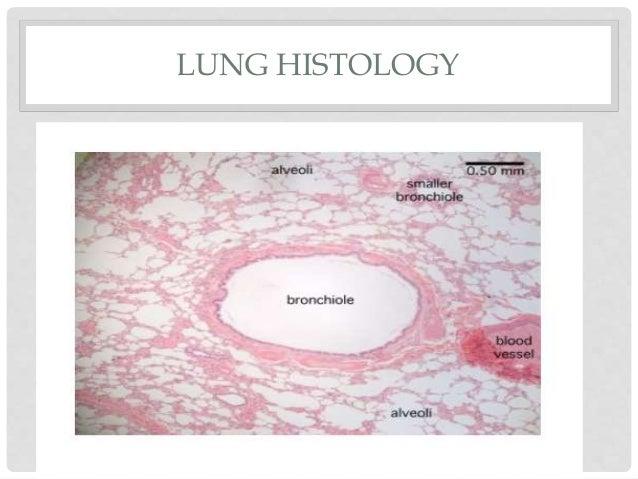 Respiratoryurinary Lab Ppt