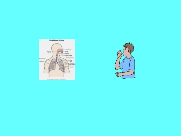 The Respiratory System   By Olivia, Megan, Savant and Caitlin