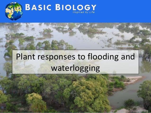 Plant responses to flooding and  waterlogging  www.worldwildlife.org