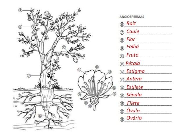 Respostas colorindo o reino plantae