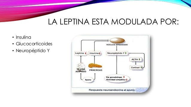 Booster de metabolismo - Información general Un