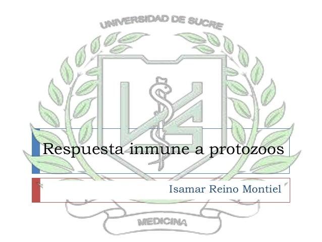 Respuesta inmune a protozoos Isamar Reino Montiel