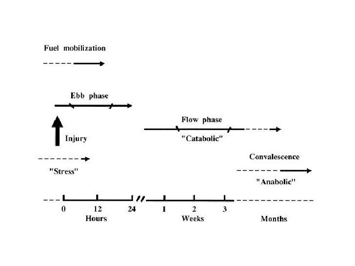 Respuesta metabolica al trauma y la infeccion Slide 3