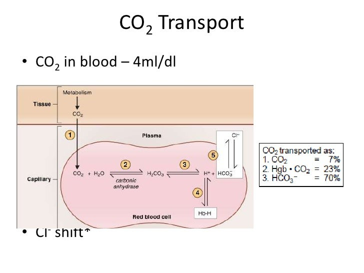 CO2 Transport<br />CO2 in blood – 4ml/dl<br />Cl- shift*<br />