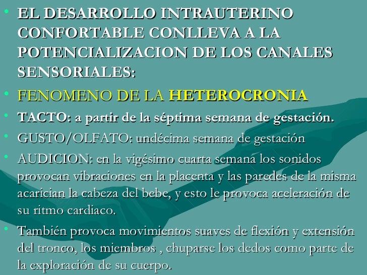 <ul><li>EL DESARROLLO INTRAUTERINO CONFORTABLE CONLLEVA A LA POTENCIALIZACION DE LOS CANALES SENSORIALES: </li></ul><ul><l...