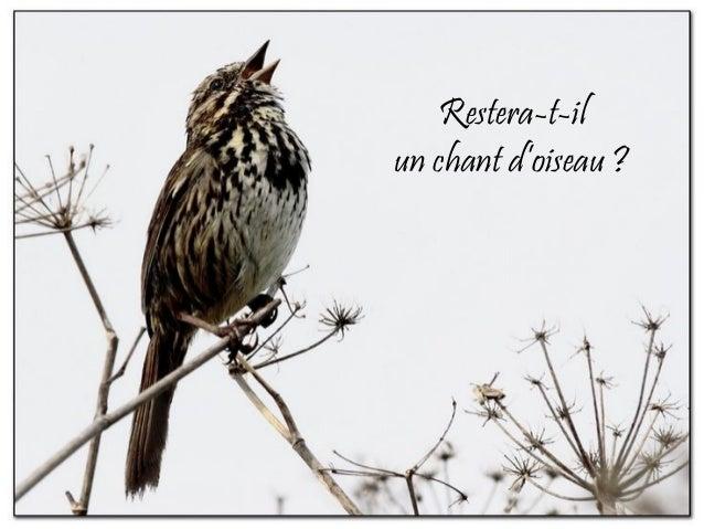 Restera-t-il un chant d'oiseau ?