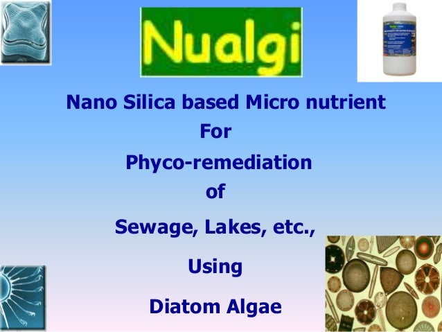 Nano Silica based Micro nutrient For Phyco-remediation of Sewage, Lakes, etc., Using Diatom Algae
