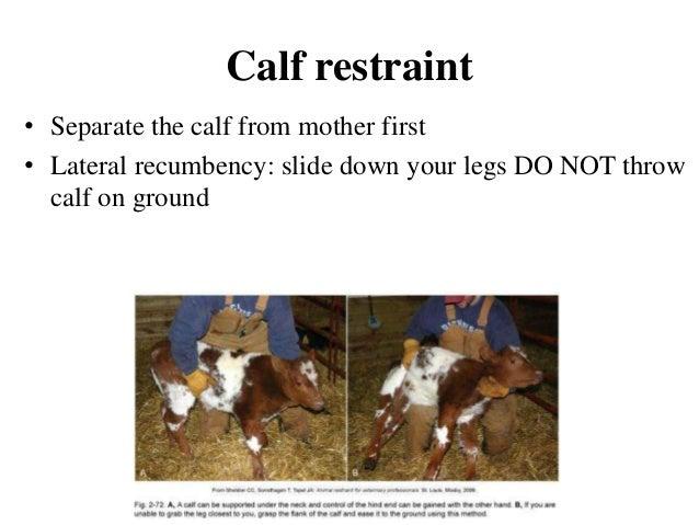 Restraining Of Animals