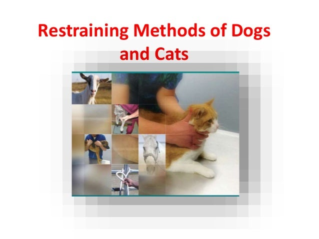Restraining Methods of Dogs and Cats Tahmeena