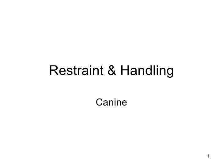 Restraint & Handling Canine