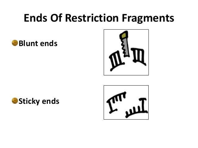 restriction enzymes and the dna Visit us ( ) for health and medicine content or ( ) for mcat related content these.