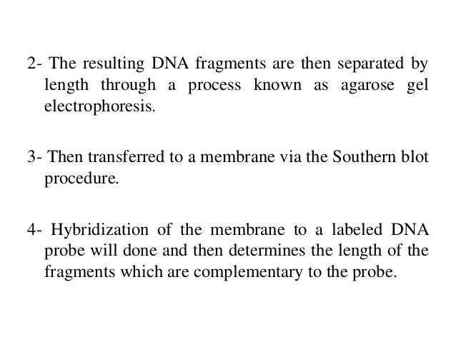 an analysis of the steps for southern blotting on digesting the dna with an appropriate restriction  Section iv analysis of dna sequences by blotting and hybridization unit 29a southern blotting southern blotting is the transfer of dna fragments from an electrophoresis gel to a membrane support digest the dna samples with appropriate restriction enzyme(s).