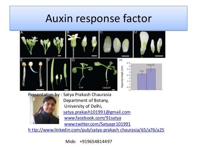 Auxin response factor  Presentation by : Satya Prakash Chaurasia Department of Botany, University of Delhi, satya.prakash1...