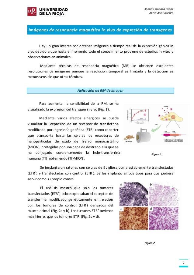 María Espinosa Sáenz Alicia Asín Vicente 1 Imágenes de resonancia magnética in vivo de expresión de transgenes Hay un gran...