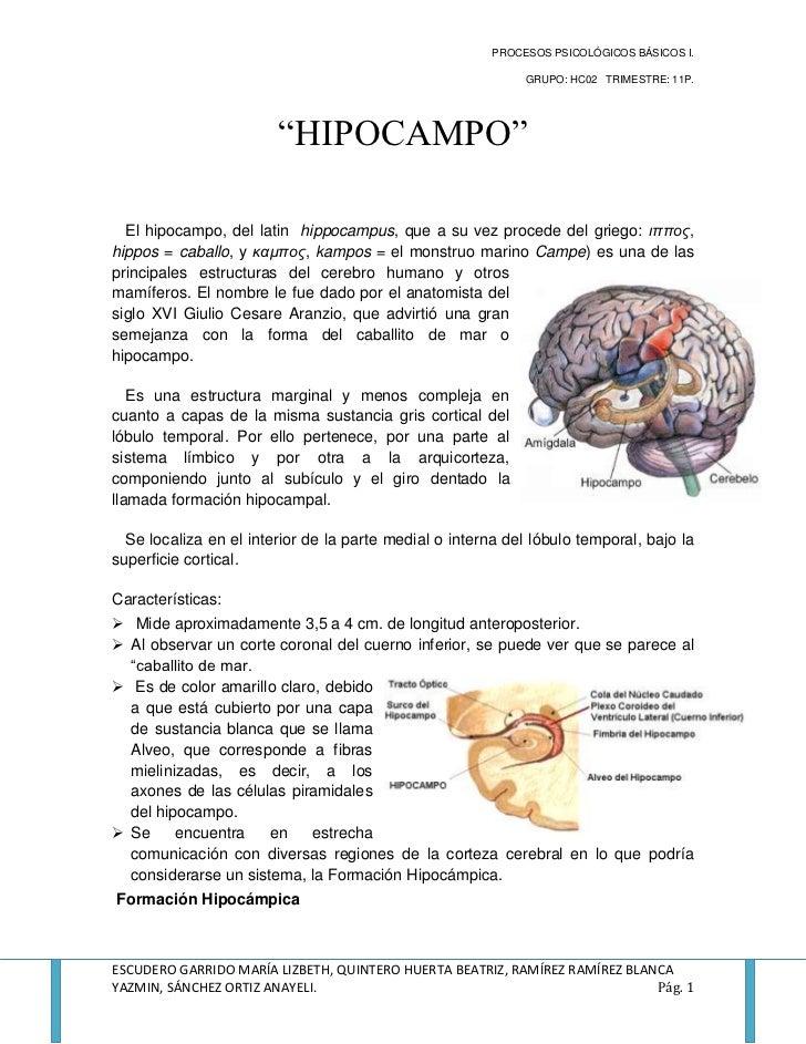 Resumen hipocampo