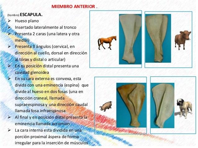 anatomía veterinaria