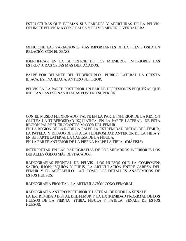 Fantástico La Anatomía De La Pelvis Radiografía Bandera - Imágenes ...