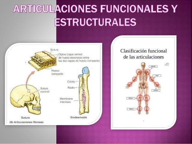 resumen de las articulaciones del cuerpo