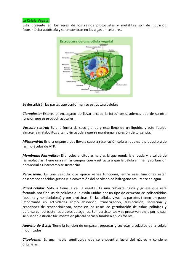 Resumen Celula