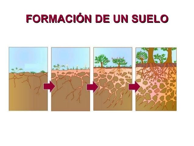 Resumen de natu tema 8 for Formacion de los suelos