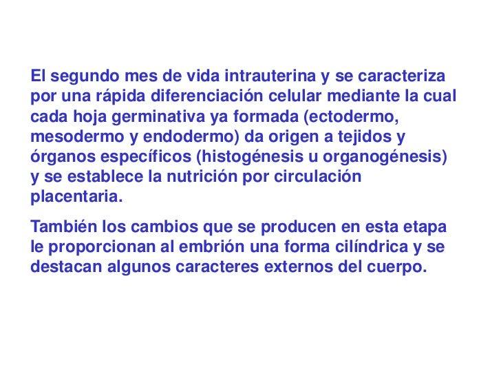 El segundo mes de vida intrauterina y se caracterizapor una rápida diferenciación celular mediante la cualcada hoja germin...