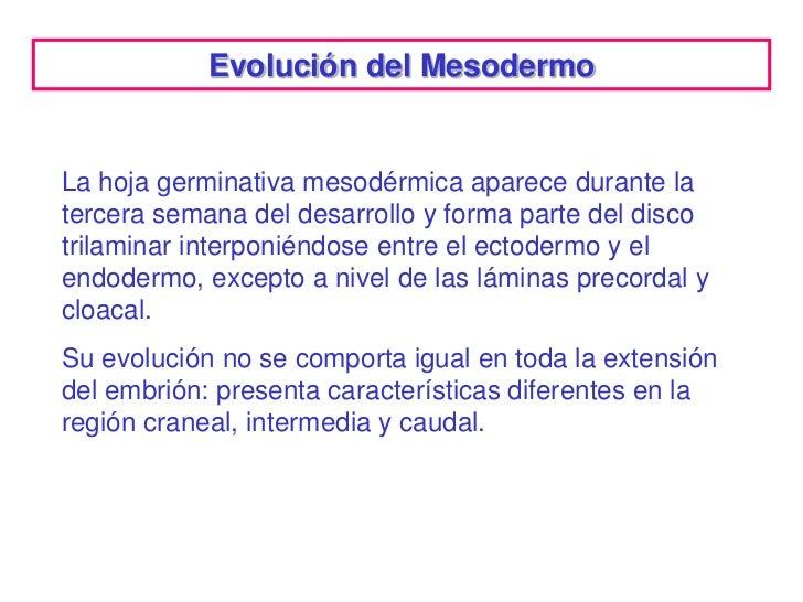 Evolución del MesodermoLa hoja germinativa mesodérmica aparece durante latercera semana del desarrollo y forma parte del d...