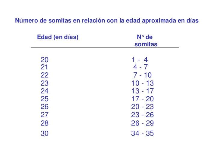 Número de somitas en relación con la edad aproximada en días       Edad (en días)                   N° de                 ...