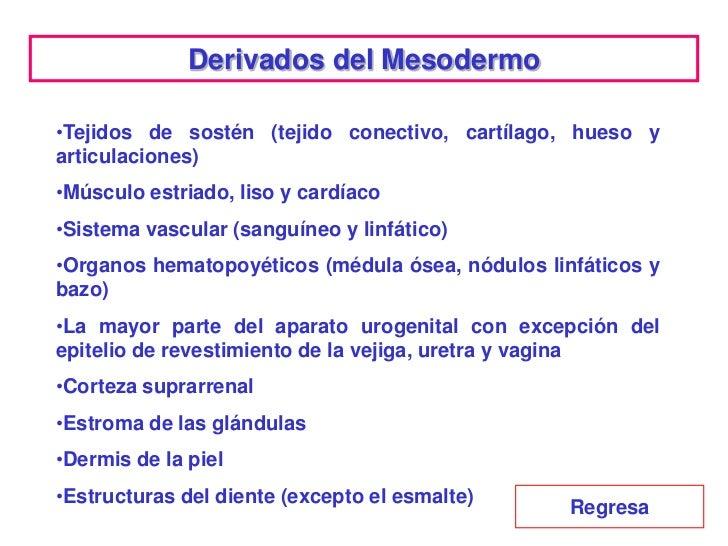Evolución del Endodermo             La evolución del endodermo             está relacionada con el             desarrollo ...