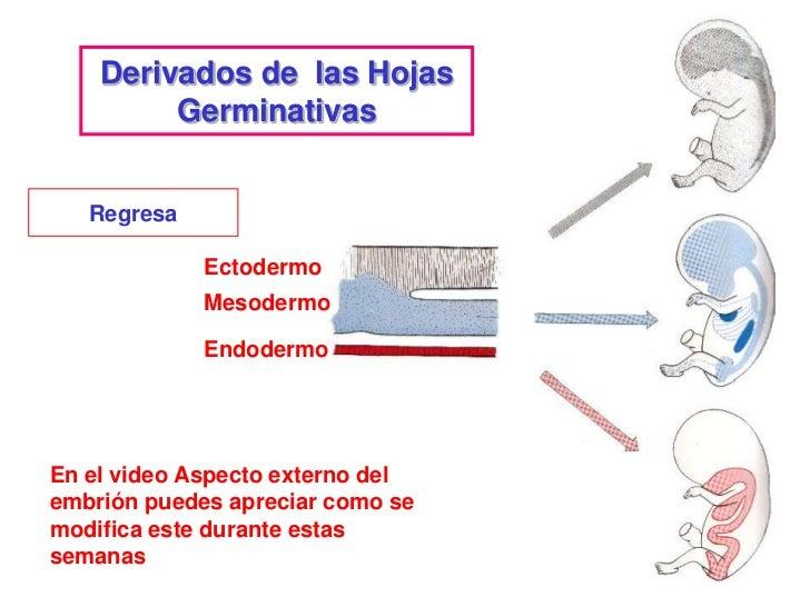 Correlación con la ClínicaDurante esta etapa se forman la mayor parte de los órganosy sistemas y constituye un período crí...